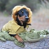 21 Adorable Dachshunds in Creative Halloween Costumes - From the Tin Man to a Mummy
