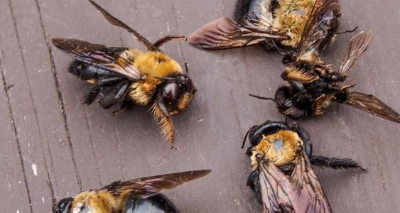 SC bees at risk due to pesticide approved using 'loophole,' scientists say