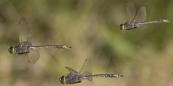 A 27-year study found the amount of insects flying in the air has declined 75% - but no one knows why