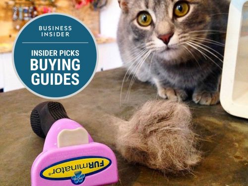 The best cat brushes you can buy