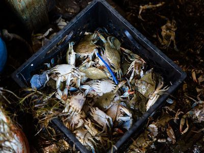 On Smith Island, Crab Is Everything. But It Might Not Be for Much Longer