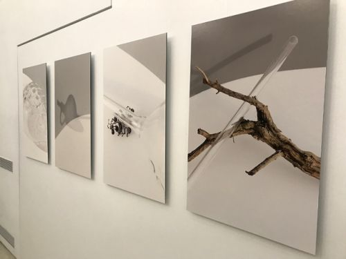 Beyond wine: Nadia Zenato's photography show in Milan was a highlight of my latest trip to Italy
