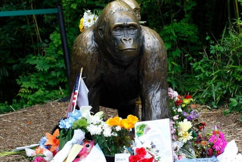 A Photo of Harambe Will Be Sold as an NFT