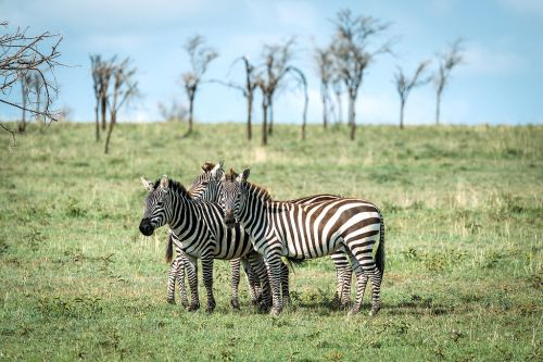 15 Photos That Will Make You Want To Visit Tanzania!