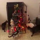 Anyone Who Has Terribly Behaved Pets Absolutely Needs This Christmas Tree Cage