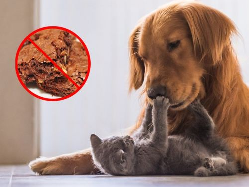 8 foods you should never feed your cats and dogs