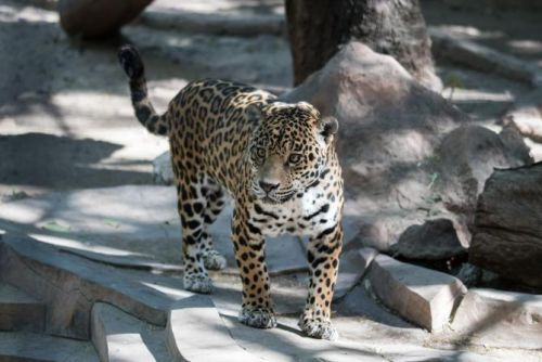 How To Help Animals In Captivity If 'Tiger King' Left You Feeling Icky