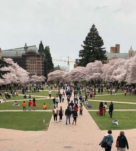 Seattle Spring: A Destination For The Senses