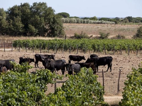 Wines to Sip from the Old World of Southern Rhône